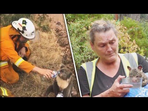 Possums And Koalas Seek Help From Australian Fires