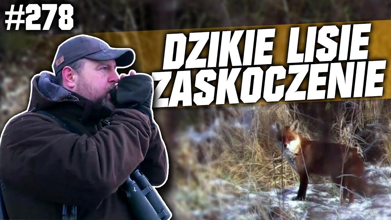 Darz Bór odc 278 – Dzikie lisie zaskoczenie