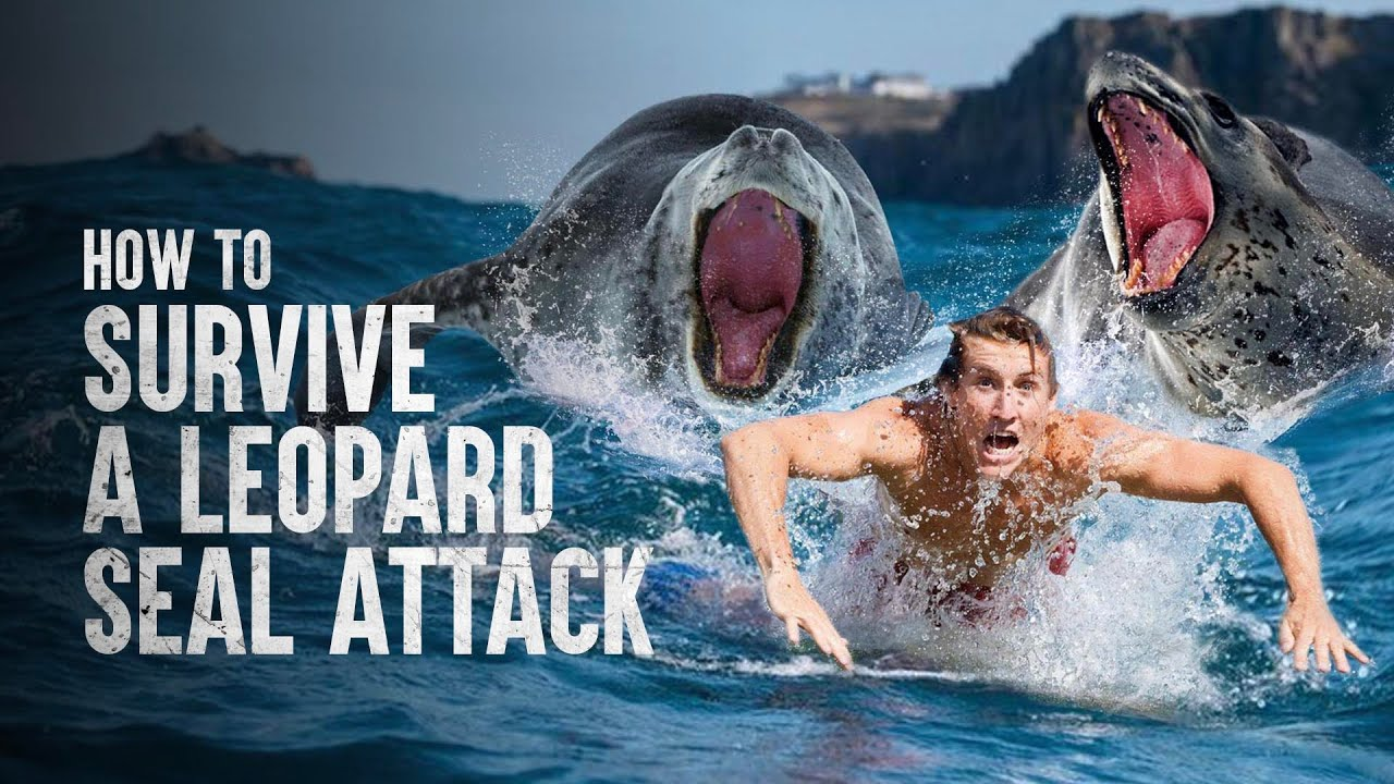 How to Survive a Leopard Seal Attack