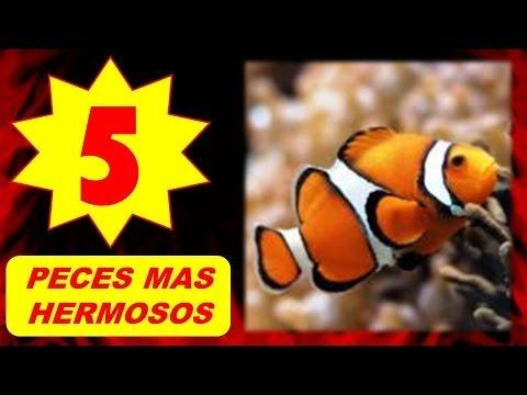 Los 5 peces m s hermosos del mundo marino youtube - Los banos mas bonitos ...