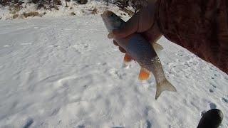 Первая рыбалка в марте 2021 ловля голавля плотвы