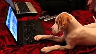Pointer puppy watching tv