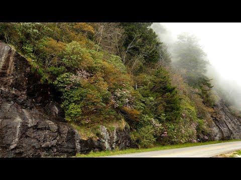 Blue Ridge Mountains: Springtime Treasures