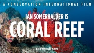 Nature Is Speaking – Ian Somerhalder is Coral Reef | Conservation International (CI)