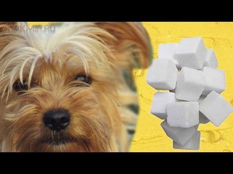 как лечить собаку если у нее диабет народные методы лечения