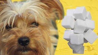 Сахарный диабет у собак | Симптомы | Лечение.