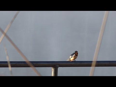 Birding at Huntsville State Park