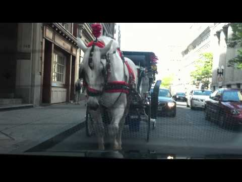 Getting run over by horse in Boston
