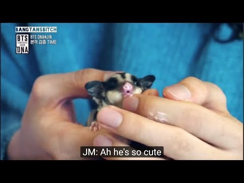 [ENG] BTS Jin Feeding His Pet Sugar Gliders