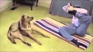 Приколы про животных, смотреть приколы 2014, приколы видео ютуб   8