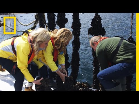 Harvesting Mussels In Ireland | National Geographic