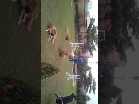 Best Uganda dogs
