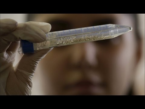 China Confirms First Case Of Zika Virus : Xinhua