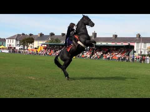 Hunt and Stunts - jumping, Amazing Horse Freestyle