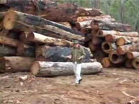 Third world logging -- destroying water catchment