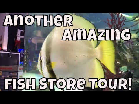 Aquarium Fish Store Tour The Fish Crew 2200 Gallon Marine Tank!