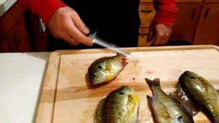 The fastest and easiest way to filet bluegill