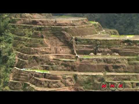 Рисовые террасы в Филиппинских... (UNESCO/NHK)