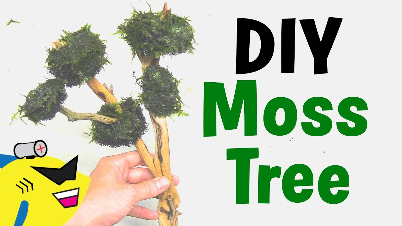 How to get moss to grow - How To Get Moss To Grow 45