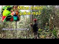 Mikat Cucak Ijo Mini Pakai  Mp3 - Mp4 Download