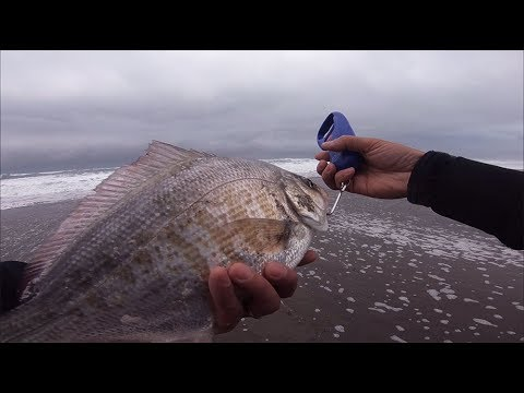 Oregon surf fishing - Catch and clean surf perch