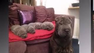Dr Pawan dog Kennel - ViYoutube com