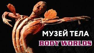 Body Worlds. ШОКИРУЮЩАЯ ВЫСТАВКА ЧЕЛОВЕЧЕСКОГО ТЕЛА