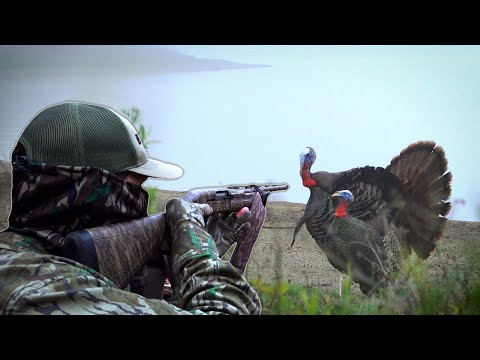 8 GOBBLERS IN 8 STATES! - Public Land Turkey Hunting!