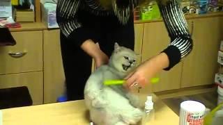 Приданое для котенка