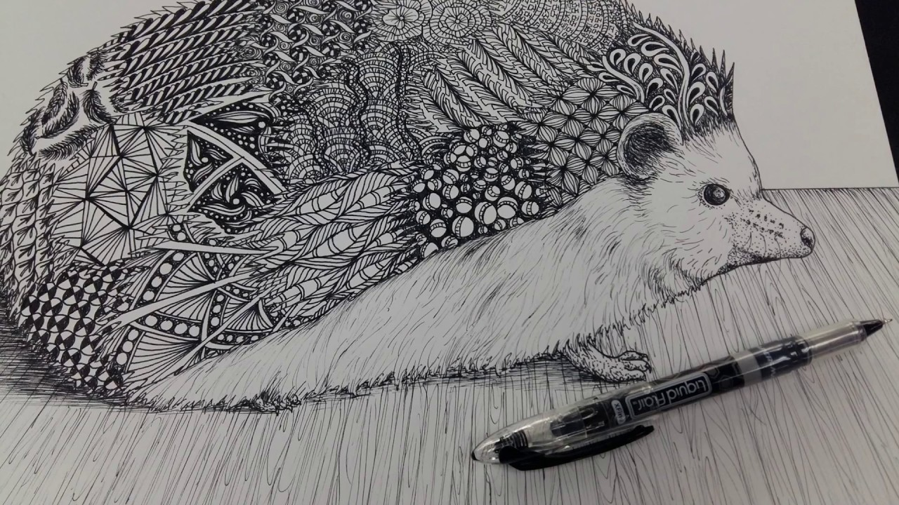Line Drawing Hedgehog : Hedgehog agave or stricta latin clip