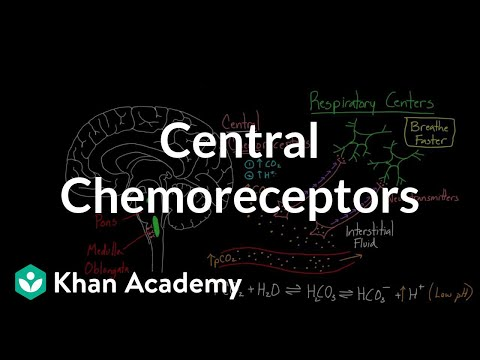 Central chemoreceptors | Respiratory system physiology | NCLEX-RN | Khan Academy