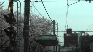 荒川線前面展望 荒川自然公園桜並木の様子(三ノ輪橋方向)