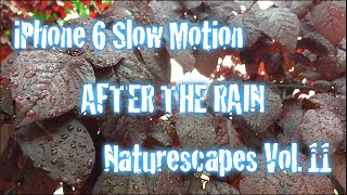 iPhone 6 Slow Motion Experiment Naturescapes 11 - After The Rain