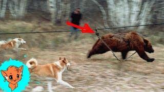 5 Трогательных Случаев Спасения Животных [Рыжая]