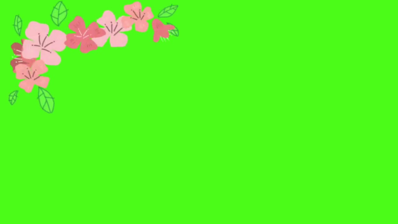 Animasi Bergerak Bunga Berjatuhan Green Screen   YouTube