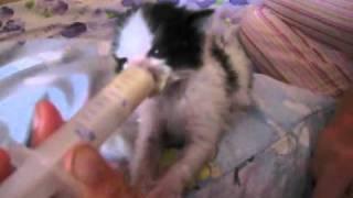Как кормить котёнка без кошки