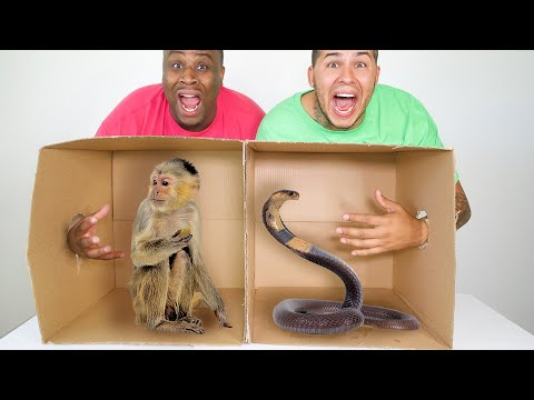 What's In The BOX Challenge!!! (GONE WRONG)