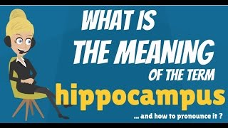 What is HIPPOCAMPUS? What does HIPPOCAMPUS mean? HIPPOCAMPUS meaning & explanation