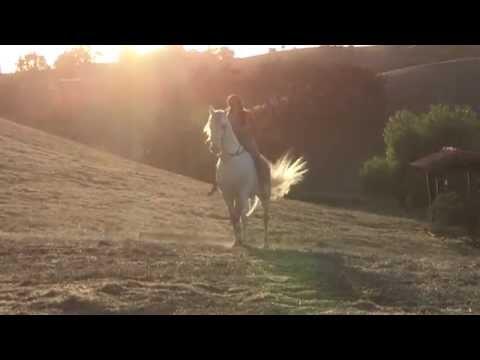 Bo Derek and Shania Twain Talk Horses