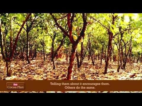 Nathan Bello's Cocoa Diary: Episode 1 - Farmer Training