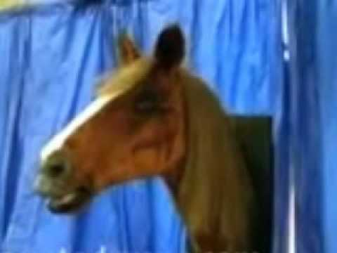 TheHorrorDome.com Talking Horse Head Animatronic