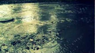дождь 20 августа 2011.AVI(это я записала, что происходит в нашем дворе, всякий раз, когда идет дождь, когда-нибудь и дом наш смоет, а..., 2011-08-19T17:49:58.000Z)