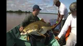 Pescaria Pirarara Gigante Araguaia / Giant red tail catfish - Fishing Brazil - SÓ PIRAÍBAS