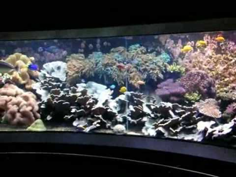 Giant 200° Panorama Tropical Seawater Reef Tank / Salzwasserbecken @ Aquazoo [48/48]
