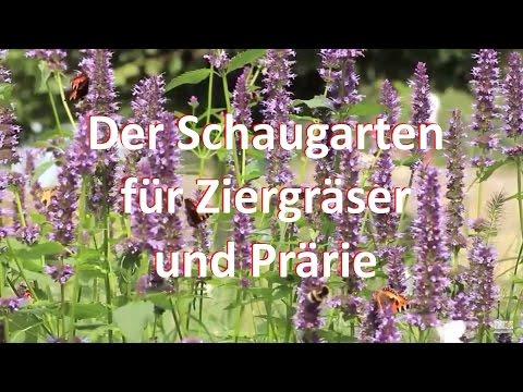 der-schaugarten-für-ziergräser-und-prärie-+31-416-69-21-21