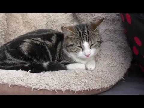 Cat & Kitten Enjoying The Hot Weather - 4K Ultra HD 2160p Resolution