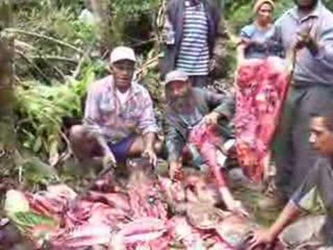 Pig Killing - Papua New Guinea (Music by John Hänni, Swiss)
