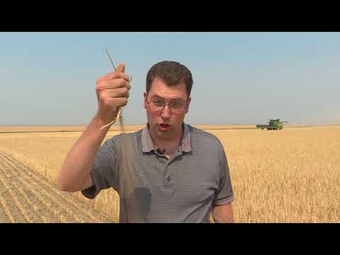 PRAIRIE FARMERS DEALING WITH DROUGHT AFFECTING CROPS AND CATTLE