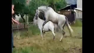 Лошади трахаются под стих Пушкина!!!