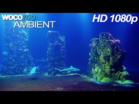 Sharks, Bubble Sounds and Meditation Music (HD 1080p)